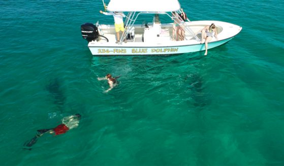 https://shellislandtours.com/wp-content/uploads/2016/07/Snorkeling-featured-photo-559x327.jpg